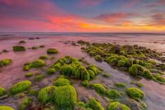 Mossy coconuts .. (zakies) Tags: mossy coconut paddlepop sunset borneo sabahsunset sabahlanscape sabahsunrise sabahborneo malaysia lowtide longexposure colorful leefilter mohdzakishamsudin zakiesphotography zakiesimage kualapenyu batuluangkualapenyu evening dusk inspirational motivation hope nikond700 nps greenland green rock bigstopper