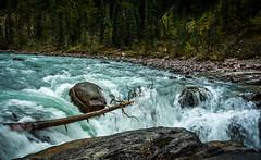 Day 1 - Sunwapta Falls (Siyuant) Tags: jasper national park water flow sunwapta falls volume