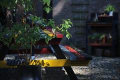 early autumn (Elly Snel) Tags: tuin garden bench table tafel bank shadow schaduw zonlicht sunlight leaves blaadjes