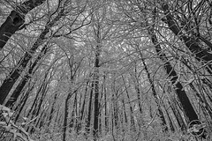 Entangled (CJ Schmit) Tags: trees winter sky blackandwhite bw usa snow monochrome wisconsin canon unitedstates glendale branches milwaukee kletzschpark canonef1740mmf40lusm 5dmarkii canon5dmarkii cjschmit wwwcjschmitcom niksilverefex2 cjschmitphotography