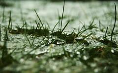 Why (Liiiindsaay) Tags: lighting winter light snow cold macro ice grass closeup garden sadness lights bokeh sony sparkle lonely why alpha avrillavigne avrillavignelyrics sonyalpha330 ineedyoumoreandmoreeachday