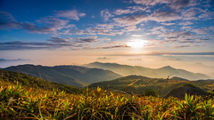 Sunrise @ Tai Mo Shan (dawvon) Tags: world china city travel sky hk plants cloud mountain nature grass sunrise skyscape landscape ed hongkong countryside twilight nikon asia zoom peak wideangle nikkor  f4 vr afs newterritories lenses morningmist zoomlens f4g 1635mm  taimoshan  fmount vibrationreduction vr2 vrii wideanglezoom  nanocrystalcoat afsnikkor1635mmf4gedvr 1635mmf4gvr
