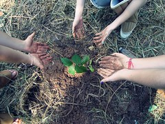 Future biologists (`Druidesa) Tags: plant tree planta love biology rvore sciences biological cincias giovana muda biologia wyvern gih biolgicas