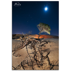 Pine star (alonsodr) Tags: longexposure nightphotography seascape lightpainting night marina landscape noche nocturnal sony paisaje torch nocturna alpha cdiz alonso tarifa carlzeiss linterna largaexposicin a900 alonsodr fotografanocturna alonsodaz alpha900 cz1635mm
