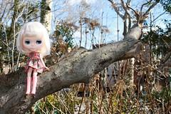Iris in the tree