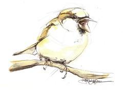 HEY! (Jennifer Kraska) Tags: bird watercolor sketch jennifer kraska jenniferkraska