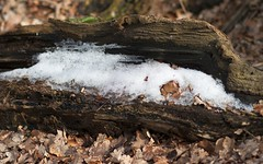 Ice tree (KF-Photo) Tags: schnee snow tree ice baum baumstamm baumstumpf icetree samyang8514