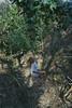 Appesa ad un Filo (AnnaPorcile) Tags: white woods ivy camicia bianca miriam edera blondhair appesa levitazione