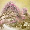 The Arrival of Spring series (Nick Kenrick..) Tags: spring blossom blossoms sakura hami tatot magicunicornmasterpiece creativephotocafe