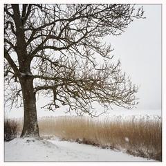 Snow storm (ClaudiaJR) Tags: