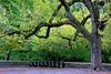 Central Park West (Eddie C3) Tags: newyorkcity trees centralpark manhattan parks cobblestones benches streetscenes parkbenches