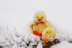 Happy Easter. (Patrick Mayon) Tags: snow nid grass easter toy happy duck nest stock chick neige jouet dcorations paques pques poussin herbes joyeuses brins