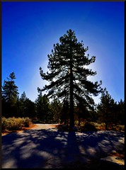 Witch Way (Geo_grafics) Tags: road blue wild vacation sky usa tree art nature cali america landscape nikon shadows wide gimp socal photograph majestic geo anything photograghy silhoet vertorama fotocompetition fotocompetitionbronze geografics