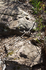 Site 6 (19 of 49).jpg ([S u m m i t] s c a p e) Tags: heritage bluemountains bushwalking grooves indigenous grinding megalongvalley ironpotmountain