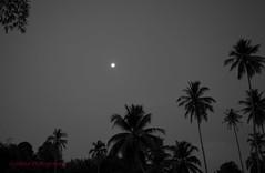 Moonlight Over Tok Bali (sydbad) Tags: hot night canon eos moonlight kelantan 24105mm tokbali 5dmk2