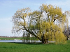 Willow, weep for me. (bjebie) Tags: ohio lake tree grass spring silo willow weepingwillow willowweepforme