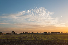 cloud (Yoni Lerner) Tags: winter sunset sky panorama cloud sun field clouds crops