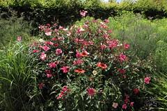 Bouquet blouissant (Chemose) Tags: villandry fleur flower jardin garden valdeloire chteaudelaloire indreetloire france canon eos 7d juin june summer