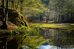 Riserva delle Agoraie (imaginumfaber.com) Tags: valdaveto liguria italy appenninoligure nature pond reflections stagno innerpeace nikond300 nikkoraf50f18 parcoregionaledellaveto paceinteriore contemplazione af5018d