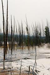 Yellowstone National Park (deudbus) Tags: yellowstonenationalpark yellowstone nature wyoming deadtrees