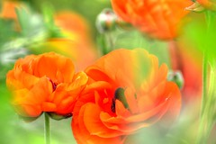 Flowers of the City (Tom Shearsmith Photography) Tags: flowers flower plant nature photo photography photoshop orange green natural hdr tone tonemap hull contrast