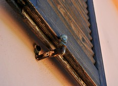 Arresto. (giuseppemontalto) Tags: blocco finestra arresto window viso volto wood persiana