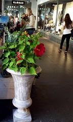 under the arcades (overthemoon) Tags: utata:project=tw540 thursdaywalk phonephotos switzerland suisse schweiz svizzera bern berne arcade shade flowers urn