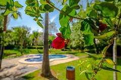 Beautiful Palma de Mallorca (Rodrigo Alejandro Carrasco) Tags: palma palmademallorca palmaimages playa mallorca mallorcalifestyle baleares balearesisland islasbaleares sony sonya6000 sonyalpha sonyalpha6000 sonyimages