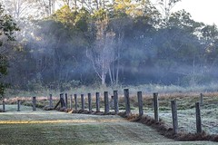 Misty/Foggy Morning (Geoffsnaps) Tags: misty morming runningcreekparklands running creek park parklands dawn nikond810 nikon d810 fx gitzogm5541carbonmonopod gitzo gm5541 carbon monopod acratechpanoramichead monopodhead acratech panoramic head nikonnikkor200500mmf56eedvrafs nikkor 200500mm f56e ed vr afs