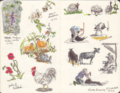 Page 14 (tanaudel) Tags: sketchbook sketching moleskine drawing illustration travel traveljournal england chagford devon dartmoor sheep shearing farm greenbankchagford chickens chicken chooks chook hens poultry guineafowl flowers foxglove poppy rooster holly