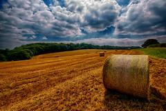 Round Bales (runman555) Tags: round bales summer trees farm farmland farming uk england shropshire clouds