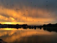 Stunning sunset behind successful spider's web. (Aquagg) Tags: sunset orange beasties silhouette web prey explore appleiphonese