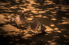 Hey Little Lady (Jims_photos) Tags: nopeople outside shadows summer wildlife outdoor adobelightroom adobephotoshop sunnyday daytime jimallen lightroom bird birds topazlabssoftware topazlabs topazsoftware