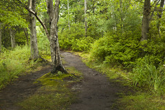 Path through the Forest (kevin kludy) Tags: forest deciduousforest deciduoustrees path pathway trail green trees bushes michigan usa quiet tranquil tranquility peaceful summer
