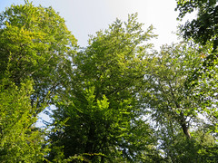 IMG_5232 (jaglazier) Tags: 2016 91416 bielefeld coniferoustrees conifers copyright2016jamesaglazier deciduoustrees germany hills september teutoburg teutoburgforest teutoburgerwald trees landscapes mountains parks