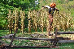 Out Standing In His Field (Trish Mayo) Tags: woodenfence scarcrow pumpkinhead pumpkin nybg newyorkbotanicalgarden halloween