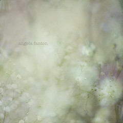 Each day ([Angela]) Tags: abstract flower nature square soft dreamy muted gypsophilia