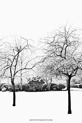 Parsonage (Zo0Bear) Tags: pictures park christmas wood xmas uk trees winter england white holiday snow plant cold tree nature up museum sisters contrast forest canon project garden season landscape outside photography photo high flickr branch graphic outdoor snowy yorkshire bald highcontrast structure dew blanket 365 middle 113 haworth parsonage sprinkling 366 2013 550d zmt