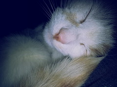 (shutupari) Tags: sleeping cute cat vintage lomo kitten feline flash kitty sleepingcat kawaii meow     cuteanimals      flickrandroidapp:filter=none