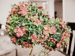 one peaceful morning (Min9ahil) Tags: morning pink flowers love sunshine work vintage photography living peace room decoration peaceful ornaments weekends ornate classy 2013 min9ahils
