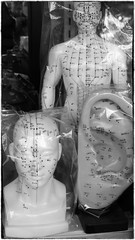 In Chinatown (halifaxlight (catching up)) Tags: sanfrancisco california bw shop wrapping chinatown unitedstates display head models plastic figure ear acupuncture acupoints blinkagain
