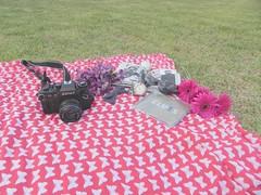 (war of my life ) Tags: camera november spring backyard nikon picnic elvis beatles zenit 2012 flowe