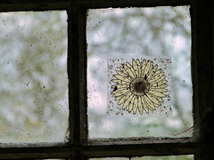 (Amber-Thomas) Tags: flower abandoned window dirt urbanexploration derelict urbex