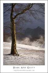 Dark and Gusty (DKNC) Tags: snow tree wind peak stormy gusty blueridgeparkway grandfathermountain macraefields sugarmountainphotography
