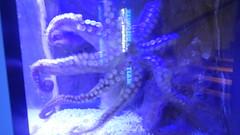 DSCN3029 (NerdBirdDK) Tags: singapore underwaterworld sentosaisland