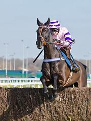 Nightforce - The Winner (Steve Barowik) Tags: horse town nikon nh national jockey chase races moor jumps trainer vr hunt highspeed doncaster steeplechase 70200mm hurdle 2013 d7000 barowik stevebarowik sbofls26