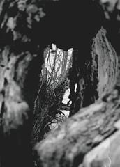 (CroytaqueCie) Tags: blackandwhite bw tree film nature analog canon landscape photography foto fotografie photographie belgium belgique noiretblanc belgië nb ilfordhp5 ilfordhp5plus400 arbre ilford analogphotography argentique tronc depanne filmphotography 佳能 عکاسی naturel trunc filmisnotdead ilfords canon1000fn fotografíaquímica fimisnotdead キヤノン 銀塩写真 آنالوگ イルフォード плёночнаяфотография believeinfilm flickrandroidapp:filter=none photoline3580 mars2013 tagsdepanne