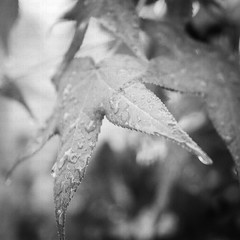 (Shadows vines) Tags: white plant black nature water monochrome rain weather landscape 50mm leaf nikon bokeh tamronspaf1750mmf28xrdiiildasphericalif d7000