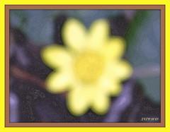 RECYCLAGE !!!... photo flou :-((( (SUZY.M 83) Tags: france nature fleur montagne jardin suzy paca provence loisirs var tourisme flore saison cration toulon nikoncooplixp500
