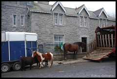 (Eithne Gallagher) Tags: ireland horse market pony roscommon towerhouse fairday ballaghaderreen